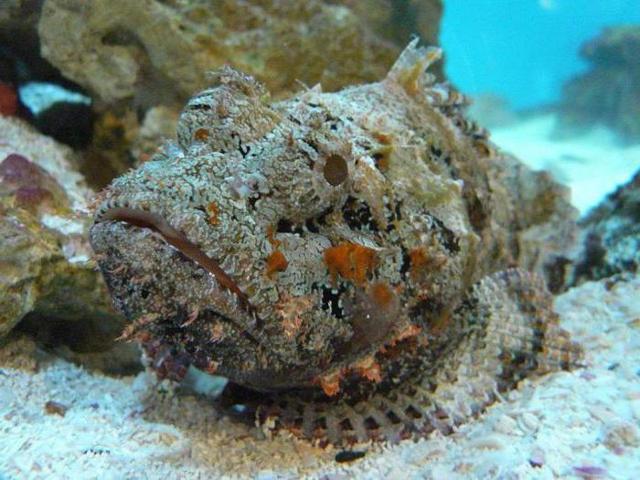 ryby głębinowe