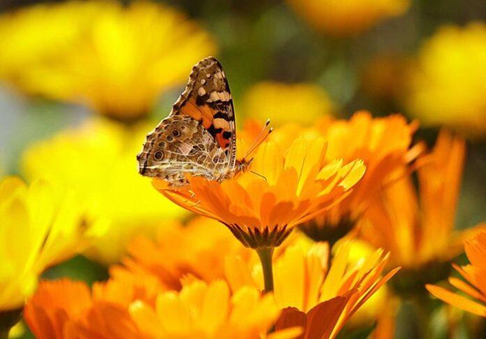 kwiaty-kwitnace-latem-ktore-wybrac-do-ogrodu-ogrodowa-galeria-zdjecie-glowne(1)