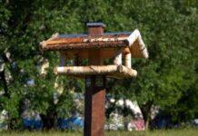 karmnik-dla-ptakow-idealne-poidelko-na-lato-sklep-drewmistrz-pl-zdjecie-glowne